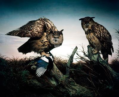 Warrior Owls