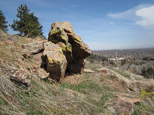 Boulder Baboon