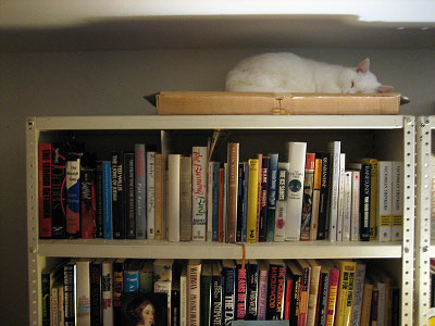 Cat on Bookcase