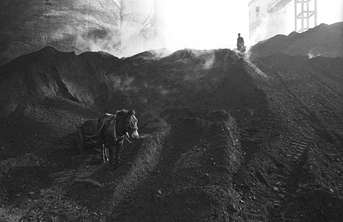 Mule in a Coal Yard