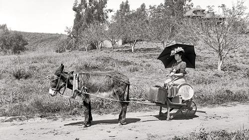 Mule Journey