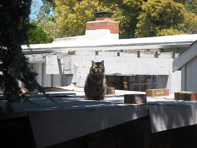 Neighbor cat