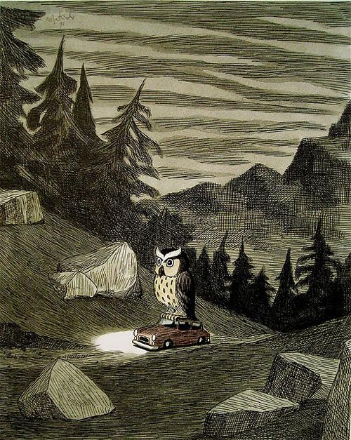 Owl on a Car
