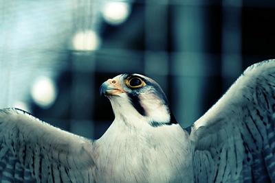 Imperial Bird